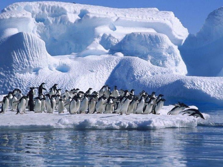 Los microplásticos ya aparecen, también, en la dieta de los pingüinos de la Antártida