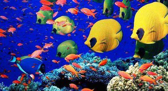 WWF: La biodiversidad de vertebrados marinos cayó un 49%